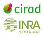 logo UMR CIRAD INRA